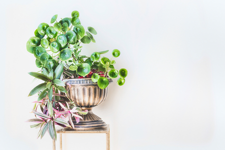 Beautiful green home interior and decor ideas. Urn planter with trends indoor plants : Chinese money plant ( missionary plant ) and Moses-in-the-Boat at white wall background Stock Photo - 101435653