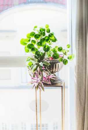 Home interior decor with indoor house plants. Beautiful urn planter with  Chinese money plant, missionary plant and Moses-in-the-Boat  on stand at window Stock Photo