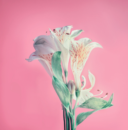 Pastel flowers layout on pink background, front view Minimal concept Stock Photo