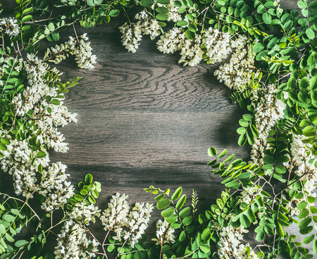 White Acacia blossom, flowers frame on rustic wooden background, top view.
