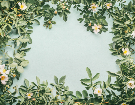 Frame of Dog-roses with white flowers on light blue background, top view Stock Photo