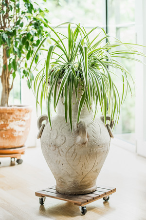 Cozy home interior design with house plants at window. Living room plants