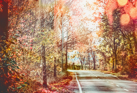 Beautiful sunny autumn road with red fall foliage trees . Travel , seasonal outdoor nature