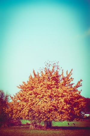 Beautiful landscape with gorgeous tree with red autumn foliage at sky and country background Stock Photo