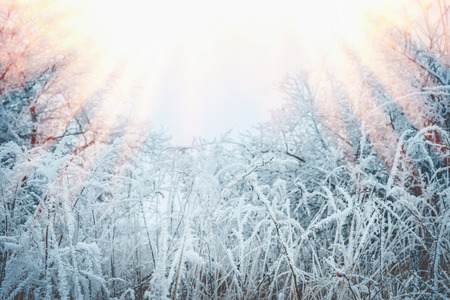 Frozen grass and plants with snow and hoarfrost. Beautiful winter nature landscape