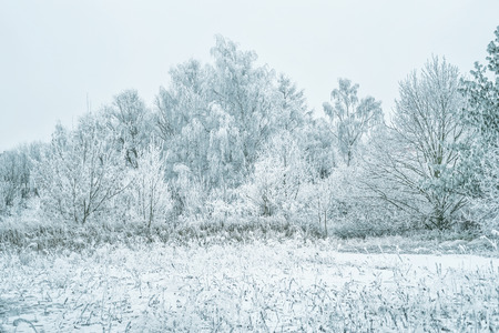 Beautiful winter nature landscape. Frozen trees and a field of snow and hoarfrost.