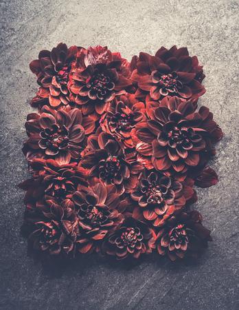 Dark red dahlias bloom layout. Autumn dahlias flowers background, top view, flat lay Archivio Fotografico - 109234410