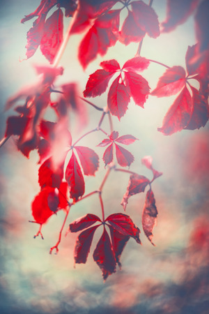 Autumn nature background with red leaves