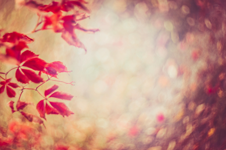 Autumn nature background with red leaves and foliage bokeh