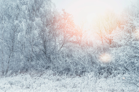 Snow covered trees , bushes and grass in early morning sunlight. Winter landscape, outdoor