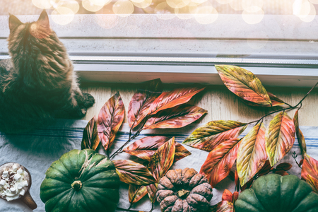 Cozy autumn home. Cat is sitting by window with various colorful pumpkins and fall leaves . Autumn still life Stock Photo