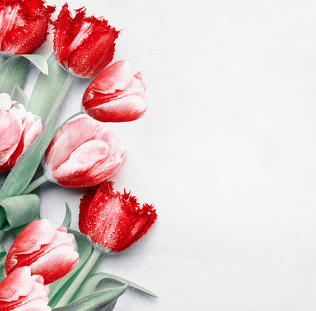Red tulips background, top view. Festive spring flowers. Floral composing. Springtime holiday and greeting concept. Copy space for your design 스톡 콘텐츠