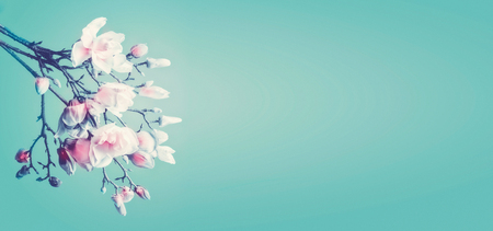 Beautiful magnolia spring blossom. Flowering branch of magnolia at turquoise background. Springtime concept. Floral border. Banner or template with copy space