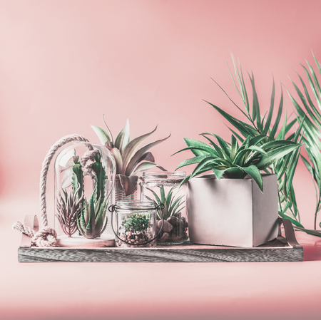 Green house plants arrangement in pots, glass terrarium and jars on table at pastel pink Stock fotó