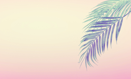 Tropical background with hanging palm leaves at gradient pastel pink and yellow. Summer concept