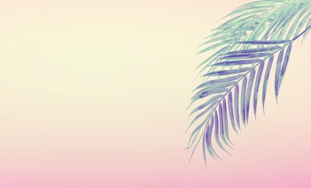 Tropikalne tło z wiszącymi liśćmi palmowymi w gradientowym pastelowym różowym i żółtym. Koncepcja lato Zdjęcie Seryjne