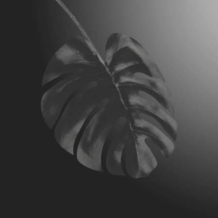 Black tropical Monstera leaf at black gradient background. Creative exotic botanical design. Template for luxury and glamour products, events , promotion or advertising 写真素材