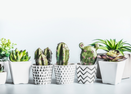 Cactus and succulents plants in modern pots on desktop at light wall