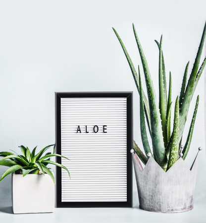 Aloe Vera plants in pots on desktop with letter board mock up at light wall