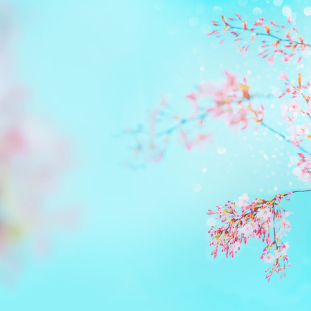 Pink spring blossom of cherry at turquoise blue sky background. Floral frame. Springtime nature background