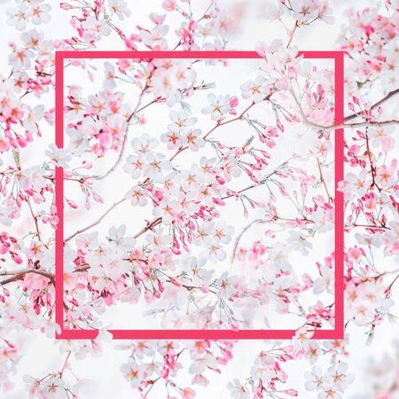 Pink frame at spring nature background with pink white blossom of cherry trees. Springtime nature. Stock Photo