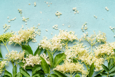 Close up of elderflowers branches on light blue background, top view