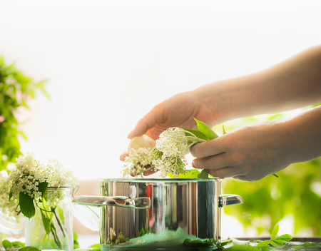 Female hands prepare elderflowers. Healthy elder flowers preparation on table with cooking pot. Homemade elderflower syrup or jam making.  Healthy seasonal natural food Stock Photo