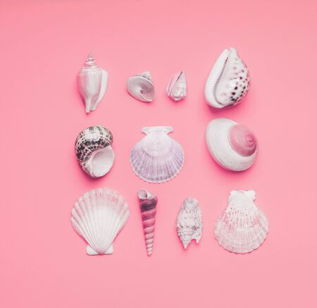Various shells on pastel pink background, top view. Creative layout. Flat lay. Summer concept