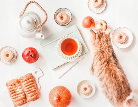 White teapot, ginger cat, little pumpkin, pastry, mini donuts, red apples and cup of tea on blank notebooks and albums on white background. Top view. Autumn still life. Flat lay