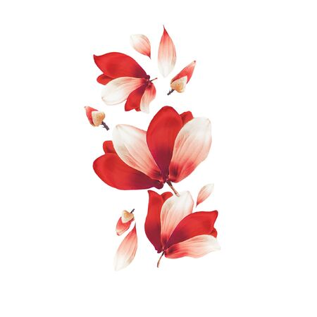 Beautiful red flowers and petals composing, isolated on white background. Creative floral layout. Flying flowers. Red Amaryllis flowers. Pattern