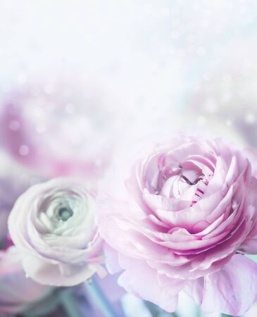 Lovely pastel flowers background. Soft focus. Close up of bloom with bokeh and petals 写真素材