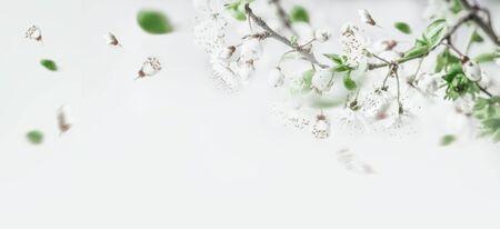 Springtime cherry blossom on white background, top view. Border. Spring mood