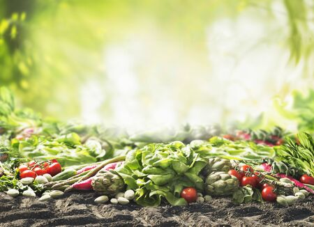 Group of various harvesting organic vegetables on soil at sunny summer  garden green nature background. Veggies growing. Eco food.  Tomato, lettuce, root vegetables,artichokes, asparagus,herbs,carrots