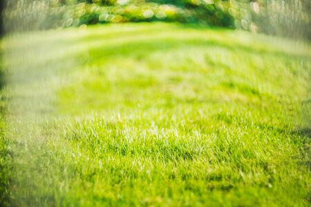 green natural lawn, grass background, blur image, place for text