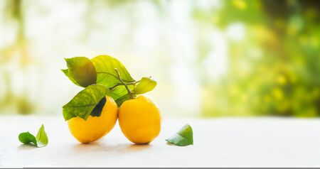 Organic lemons on branch with green leaves on white table at green summer garden nature background with bokeh. Horizontal, place for design or product