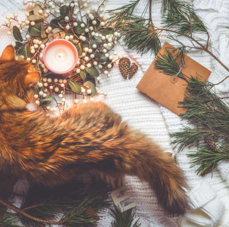 Cat on white rug with Christmas decoration: winter wreath, burning candle, softwood, pine cones, craft paper. Festive winter concept. Top view