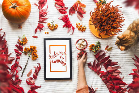 Autumn beauty concept. Flat lay composing with women hand holding red cup with hot chocolate, ginger cat, autumn leaves and pumpkin, black tablet PC with white screen. Hygge style. Cozy. Top view
