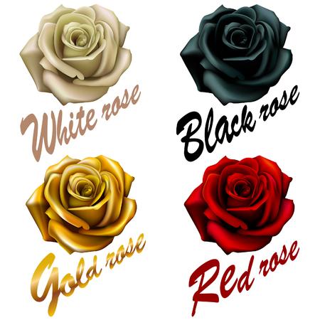 set fiori rose. rosso nero oro bianco. iscrizione emblema.