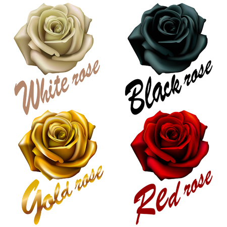 set  flowers roses. red black white gold. inscription emblem.