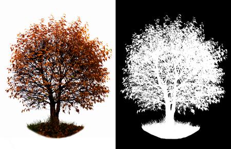 가을 노랑 잎 두 세트 사진 스톡 콘텐츠