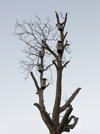 many nesting boxes on an old tree in spring