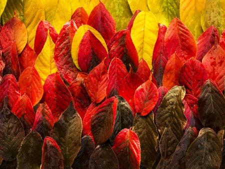 Background made up of autumn leaves of red yellow green