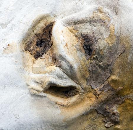 scary monster mask on tree bark