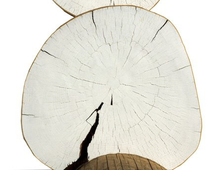 white background cracked log texture