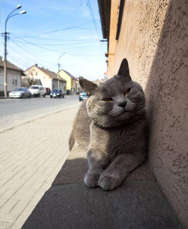 cat resting in the sun
