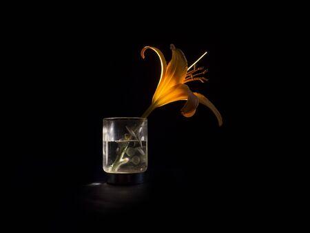 orange lily flower on a black background