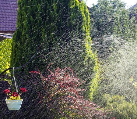 the garden is watered in the sun Reklamní fotografie