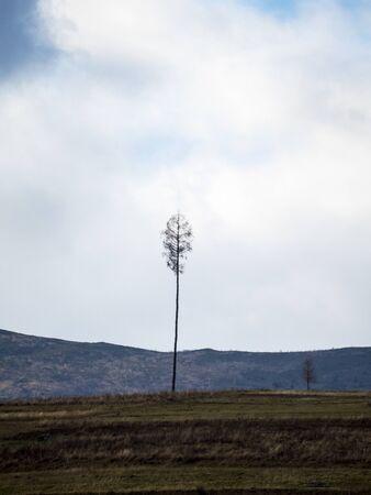 lonely tree grows on a hill on the horizon Reklamní fotografie