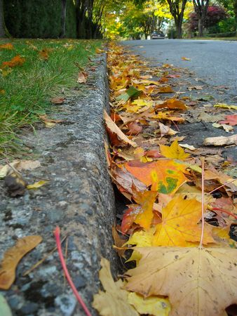 Autumn leaves on the roadside.