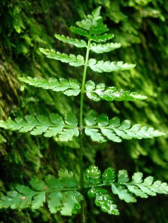 A small fern frond